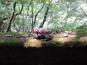三段峡カエル